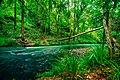 Yabba Creek at Bella Creek near Imbil.jpg