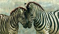 Zebra with young painting.jpg