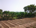 Zone maraichère de Péyiri.png