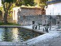Zoo Pinguine HY 2.JPG
