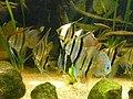 Zoo Wuppertal 2007-04-30 (000127).jpg