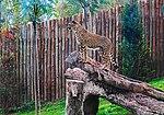 Zoo de Lisboa by Juntas 68.jpg