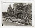 """Alicon,"" Charles Hinman Graves house, 2310 Santa Barbara Street, Santa Barbara, California. Flower border LCCN2008680078.jpg"