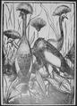 """""""Crested Cranes"""" - NARA - 558870.tif"""