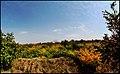 (((مناظر پاییزی باغات مراغه))) - panoramio (5).jpg