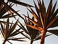 (1)Cactus 010.jpg