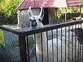 Альпака в Ялтнском зоопарке.jpg
