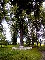 Багатовіковий дуб «Велетень», Прилуцький район, сел. Линовиця 74-241-5026.jpg