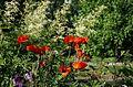 Ботанический сад, Минск - panoramio (6).jpg