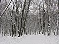 Голосіївський парк ім. М.Рильського взимку 03.JPG