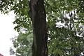 Дерева у парку.jpg