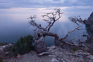 Життя старого дерева.jpg