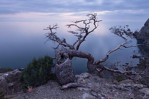 Життя старого дерева