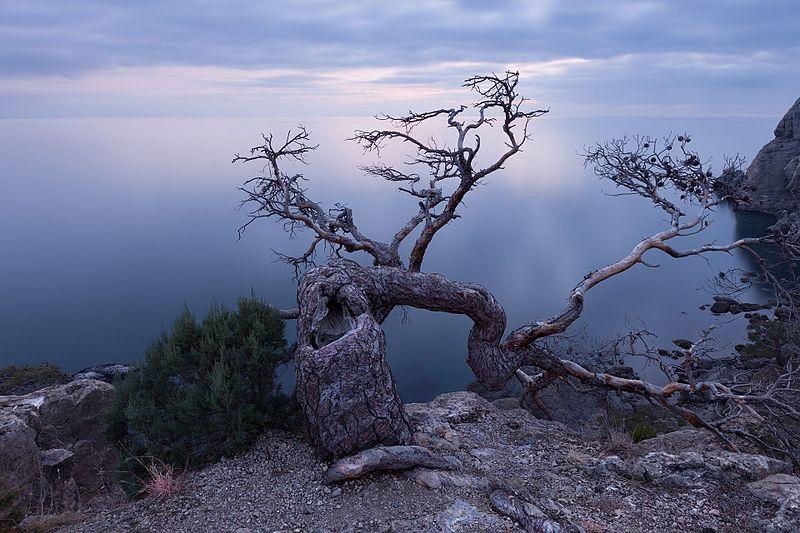 File:Життя старого дерева.jpg