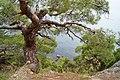 Караул-Оба, деревья, Крым, Karaul Oba, Crimea.jpg