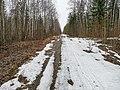 Лесная дорога 15.jpg