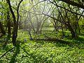 На берегу реки камышенки - panoramio.jpg