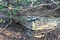 Непран Вячеслав, Осинівські піщаники, геологічна Пам'ятка природи, 44-233-5002, 49°33'14.4N 39°04'09.7E (5).jpg