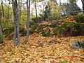 Осень в парке Монрепо.JPG
