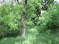 Парк шума Гази Баба во мај (23).JPG