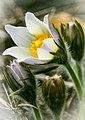 Первые цветы (262939161).jpeg