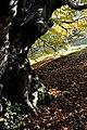 Плана - ЗЗ по директивата за местообитанията – ZZ1307 – вековното дърво до връх Манастирище - No3.jpg