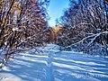 Региональный ландшафтный парк «Диканский» зимой 3.jpg