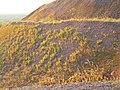 Териконник (отвал породы) бывшей шахты №30 - panoramio.jpg