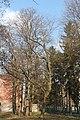 Тернопіль, дерева.jpg