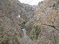 Тисо-самшитовая роща (вид со смотровой площадки),1 км от Хосты вверх по течению реки, Хостинский район, Сочи.jpg