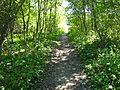 Тропа в лесу - panoramio.jpg