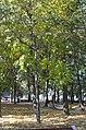 Центральний парк у Вінниці. Фото 1.jpg