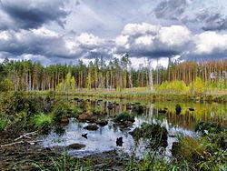 Чистое озеро.jpg