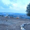 גן הפסלים בכאוכב אבו אל היג'א, ישראל 06.JPG