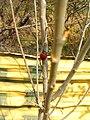 کفش دوزک سپیده از فیوچر - panoramio.jpg