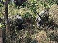 जंगल भ्रमणको दौरान देखिएको गैंडा.jpg