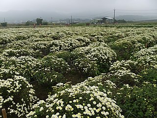 Floriculture in Taiwan