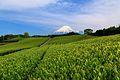 今宮の茶畑 - panoramio (2).jpg