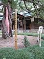 円覚寺のビャクシン (2895013632).jpg