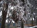 庐山冰挂 - panoramio.jpg