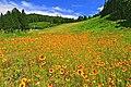 旧ハイランドスキー場の風景 - panoramio.jpg