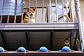 犬視線|猫目線 (44667612452).jpg