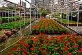 自來水園區花圃 Nursery in Waterworks Park - panoramio.jpg