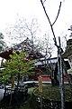 黄門桜と昭和天皇御参拝記念樹 - panoramio.jpg