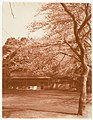-Cherry Tree with House in Background- MET DP136191.jpg