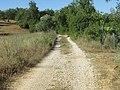 05-06-2017 Section of Via Algarviana long distance footpath (4).JPG