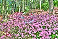 15-13-039, azalea garden - panoramio.jpg