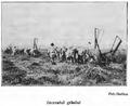 1910 Seceratul grâului cu maşina.PNG