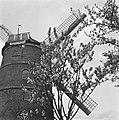 19460429 De Zwaan Lienden GL NL Bestanddeelnr 901-6952.jpg