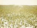 2012-01-29 um 15-08-05 (7443291992).jpg